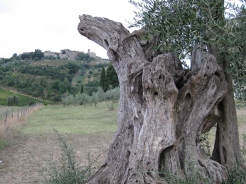 Val D'Orcia 108
