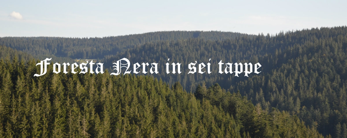 Foresta Nera in sei tappe